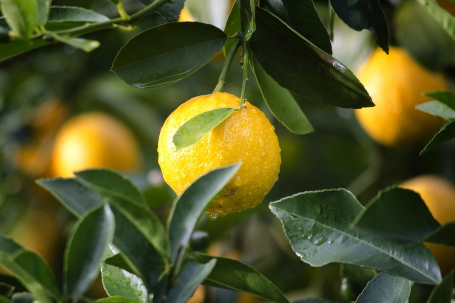 10 reasons why we are in love with citrus fruits