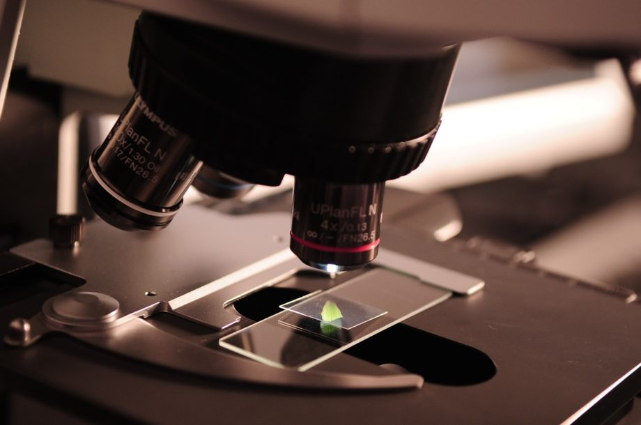 Stem cells guide for dummies: all you need to know